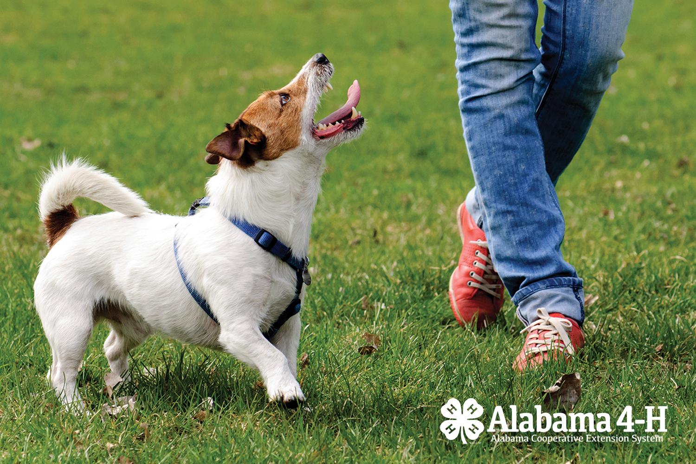 Alabama 4-H Good Dog