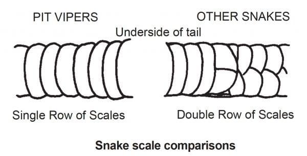 Snake scale comparison