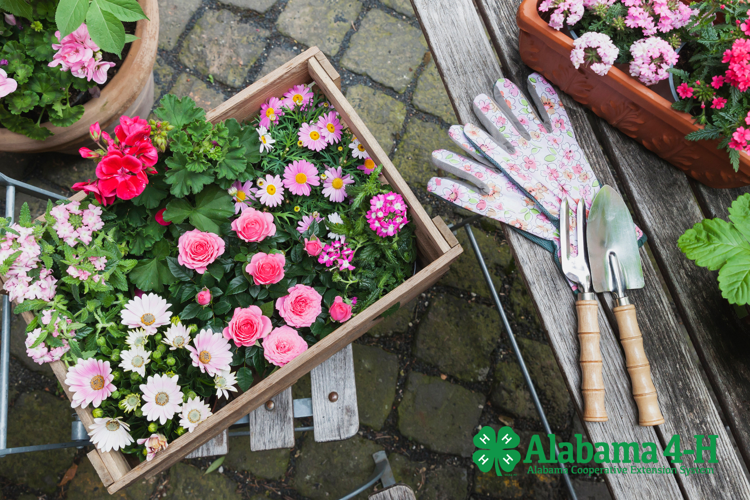 Alabama 4-H Art of Container Gardening project; flowers in containers