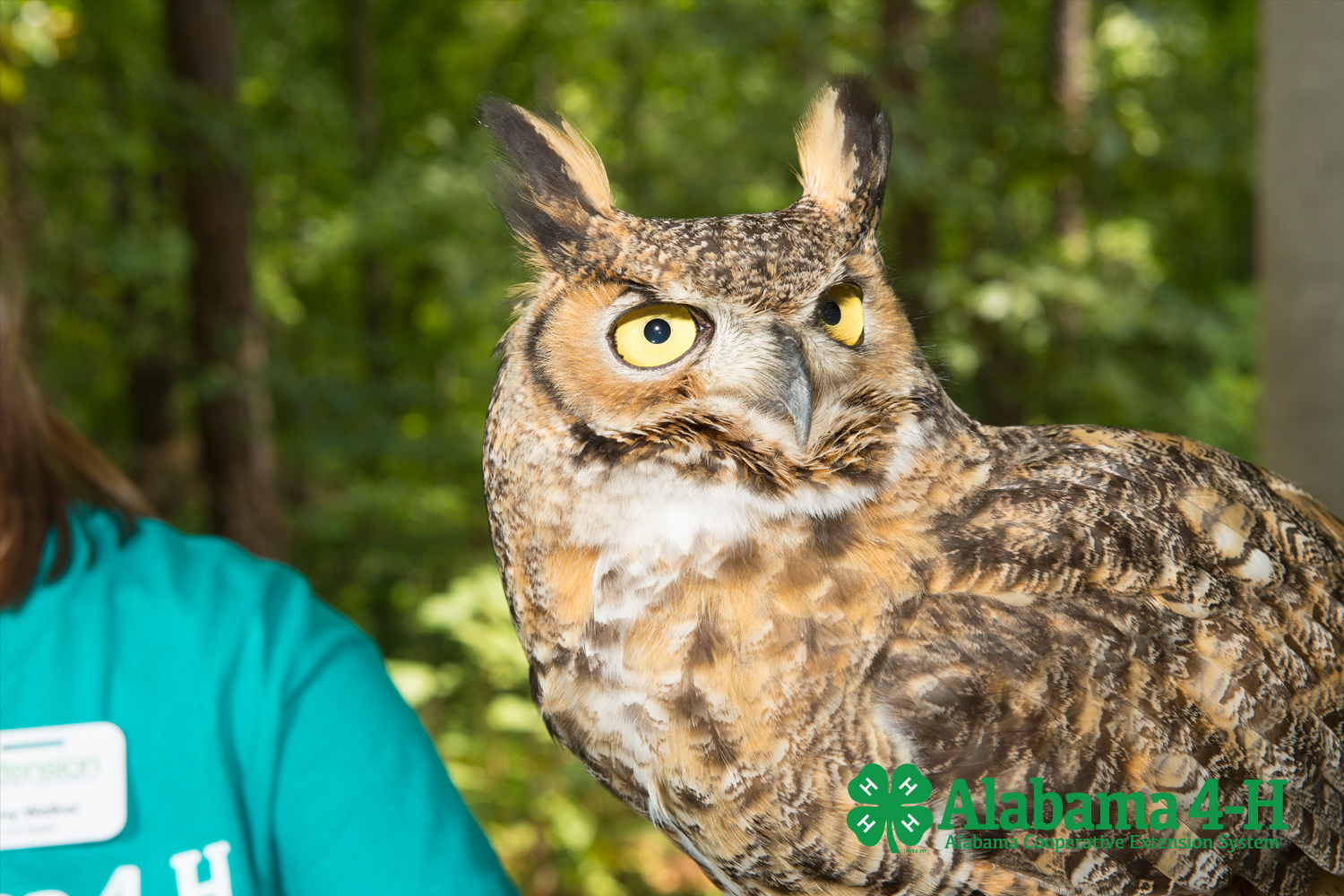 Alabama 4-H Raptor Trek; image of Science School bird