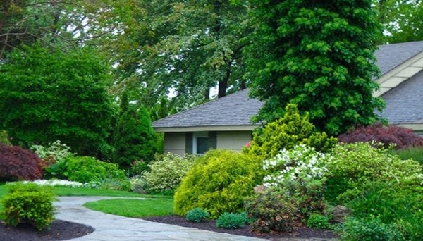 Home landscape with dense shrubs