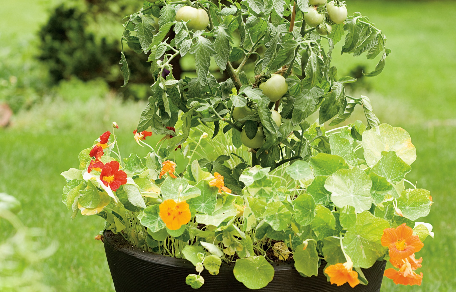 Garden planter filled with flowers and tomatoes, in a backyard setting.