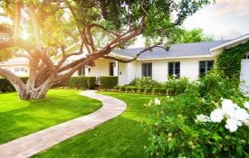 Single story white ranch house with tree in front yard, bushes and manicured lawn
