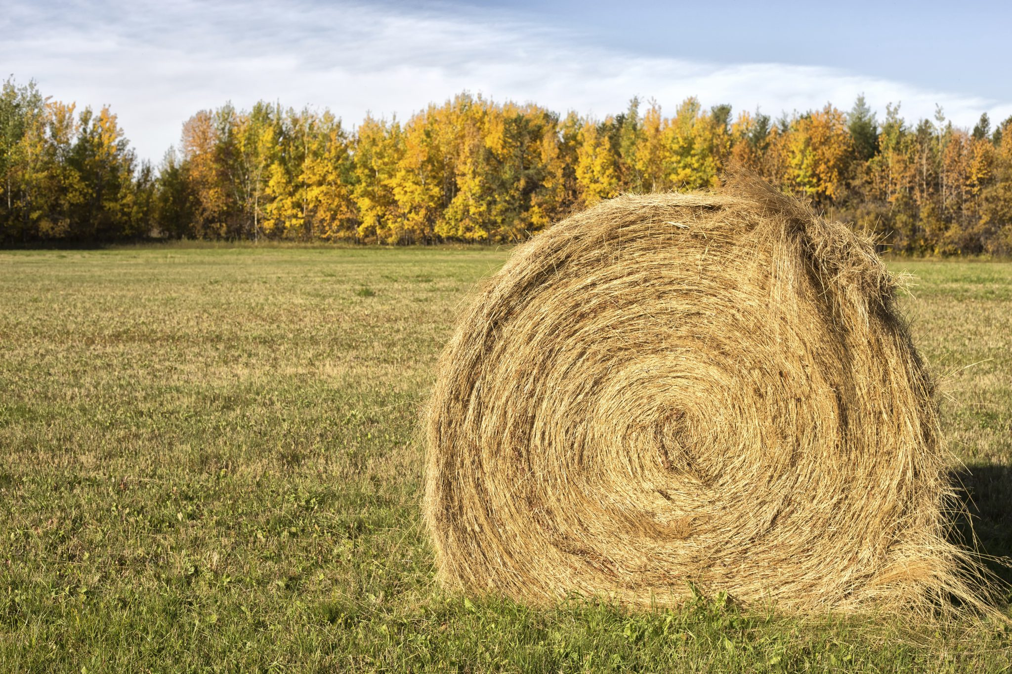 Round bale of hay in a field.