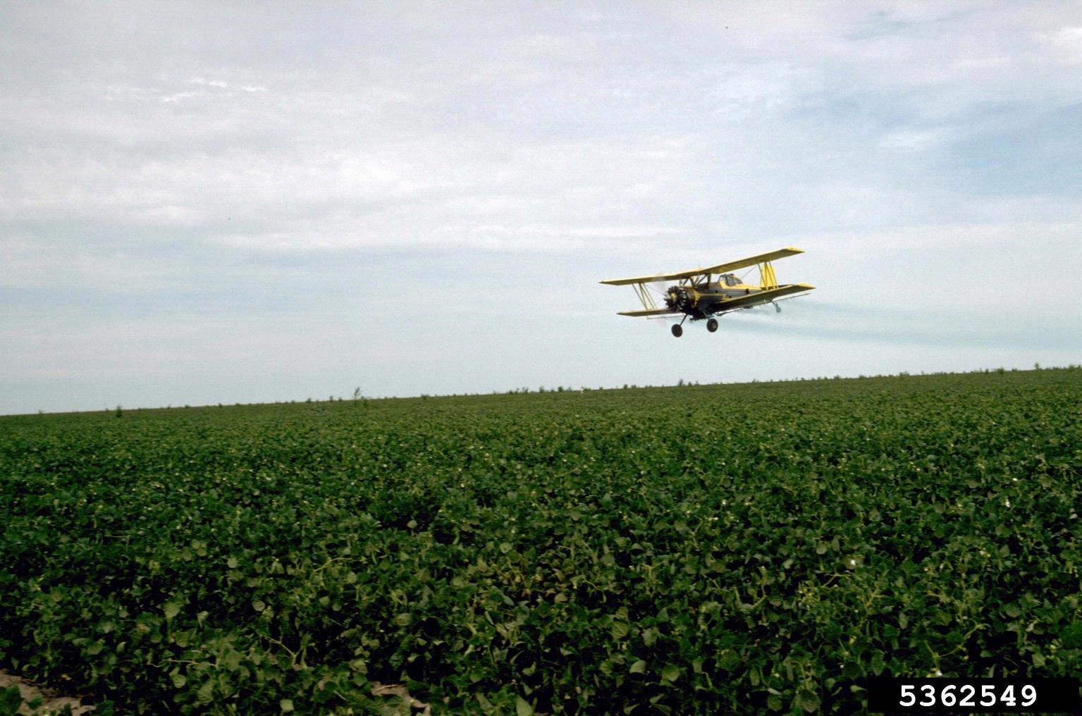 Yellow Airplane spraying dry beans .