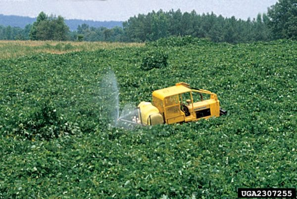 Broadcast spray application can be used on kudzu.