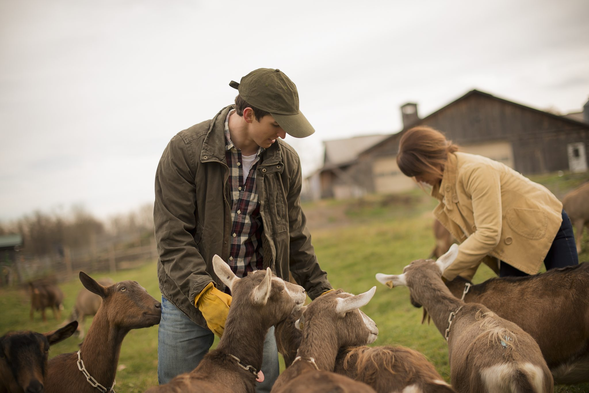 Man and woman tending to their goats.