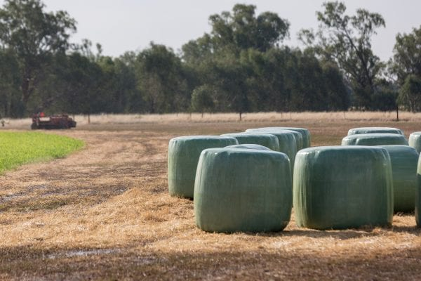 Round hay bales wrapped in plastic to produce a higher forage quality for live stock.