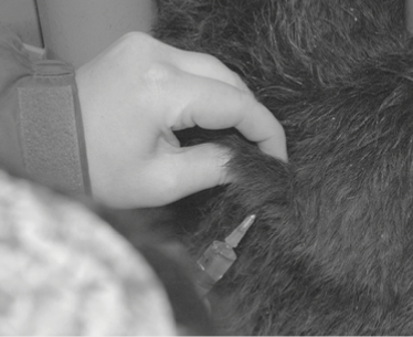 Use the tenting method for subcutaneous injections.