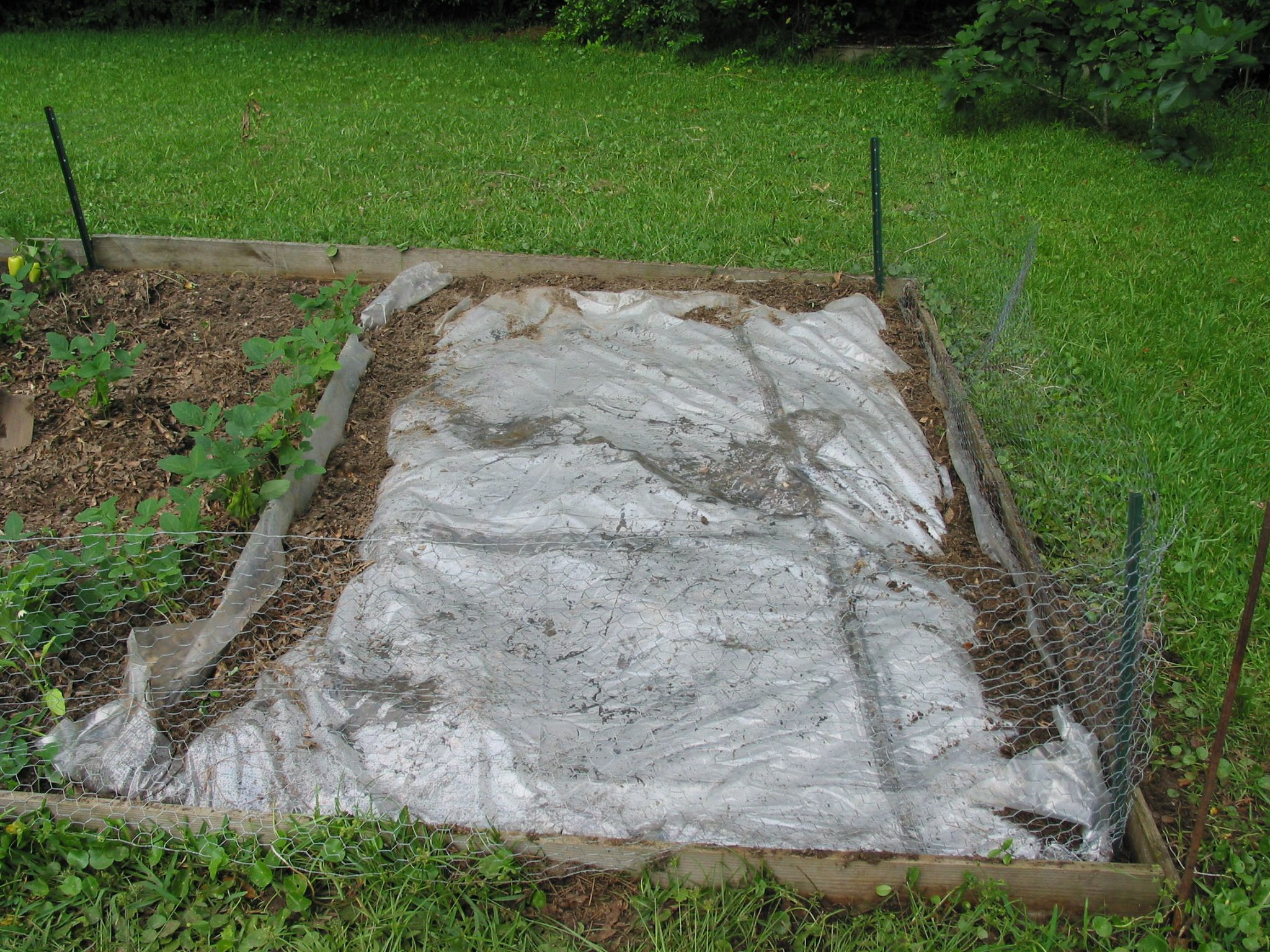 Soil solarization can provide good weed control in home and commercial vegetable production.