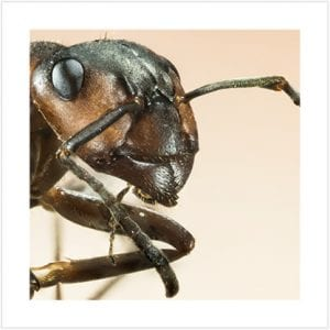 Close-up view of an ant