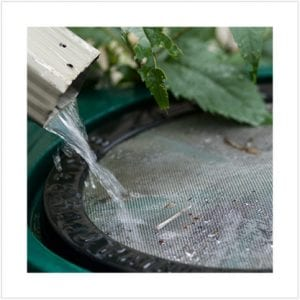 Rainwater flows from drainspout into rainwater collection barrel
