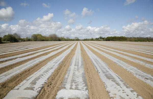 Soil solarization can be an effective alternative to costly pesticides and lengthy crop rotations.