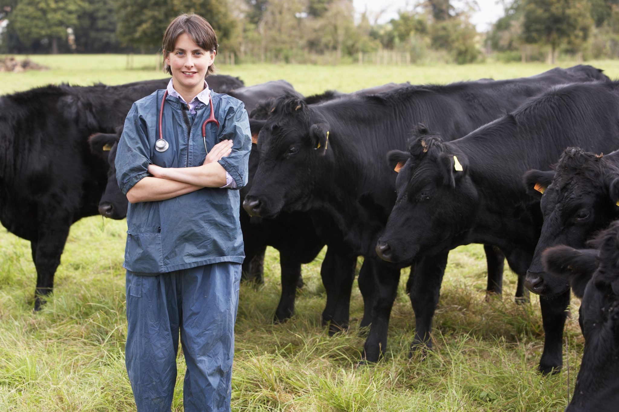 Vet In Field With Cattle