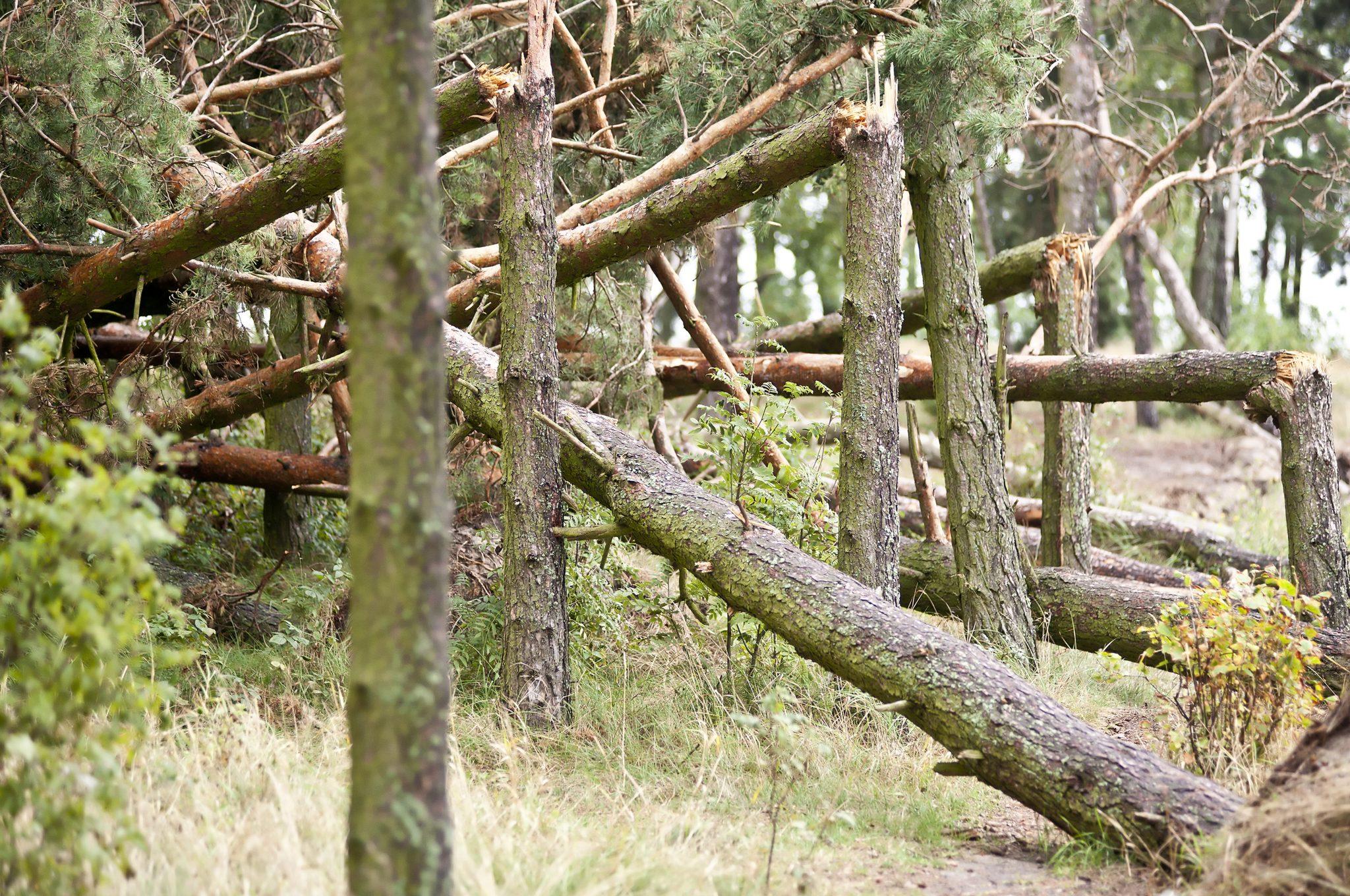 Damaged Trees
