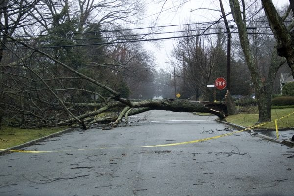 tree down in road
