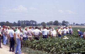 Demonstration in Field - Group of people stading in a soybean field having a class. - John C. French Sr., Retired, Universities:Auburn, GA, Clemson and U of MO, Bugwood.org