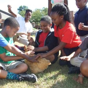 Children sit in a circle and pet a hen.