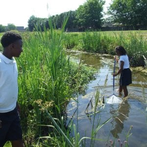 Two students are in a small stream using a net to collect specimen.