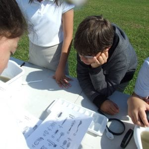 Participants look over a bug identification chart to identify specimen they collected.