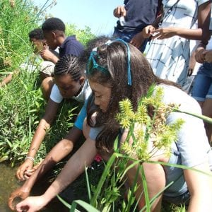 A group of students leaning close to the water edge to try to catch minnows and water bugs with their hands