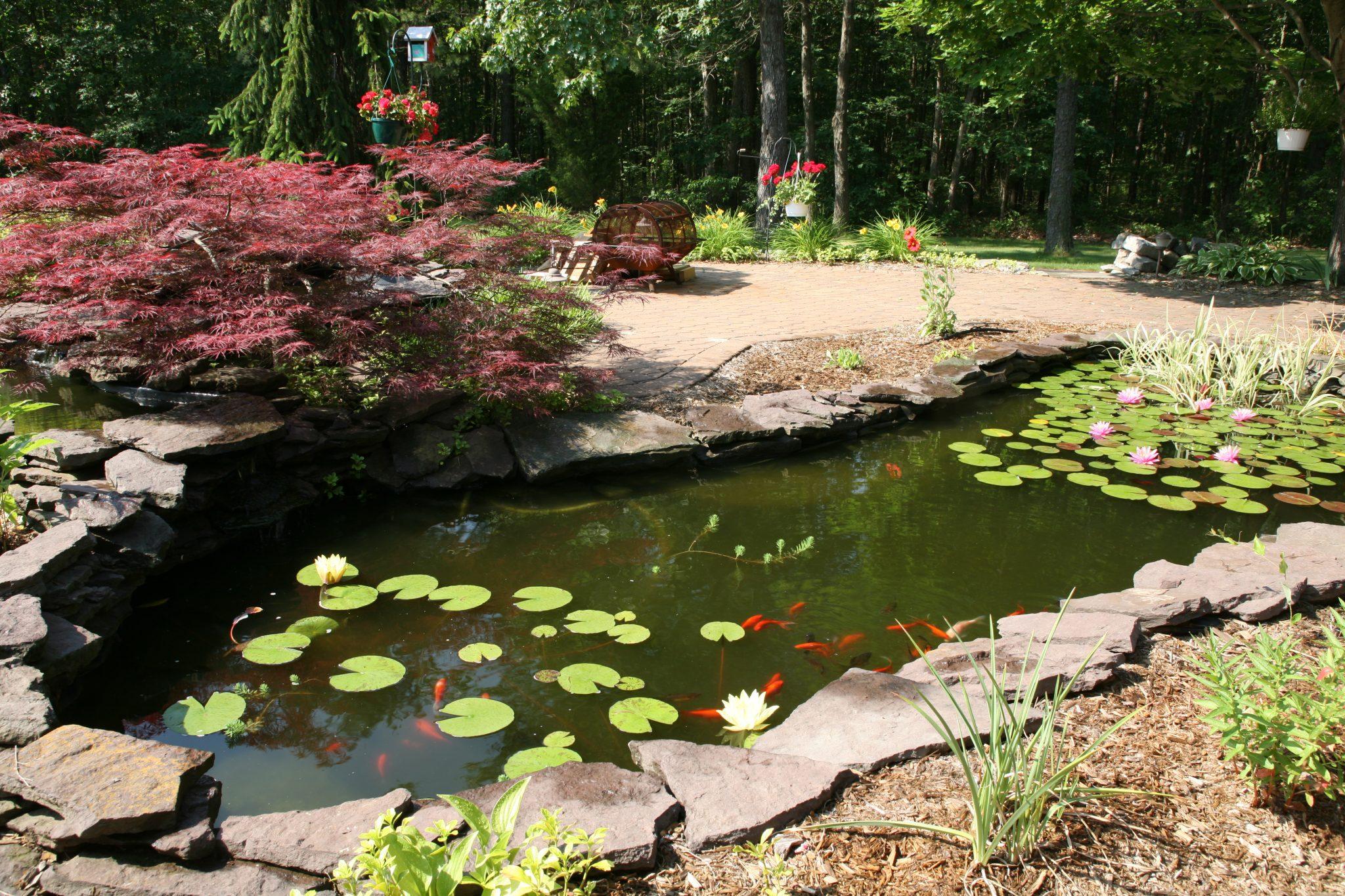 a backyard koi pond