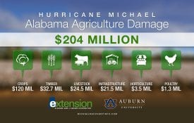 ag damage from hurricane michael