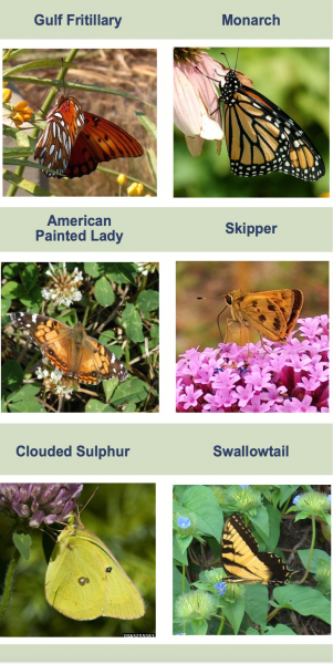 Figure 16. Some caterpillars may be pollinators or butterflies that people want to attract to their yards. Many are protein and fat sources for birds. (Photo credit for monarch and clouded sulphur: David Cappaert, Bugwood.org)