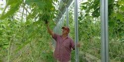 Man walking in a greenhouse