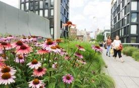 flowers growing in urban setting