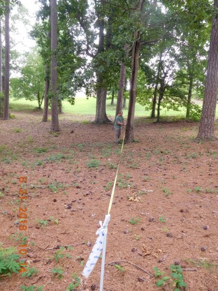 View from plot center. When measuring out your fixed-radius plot, stretch your tape out to the appropriate plot radius and systematically determine which trees fall within your plot. Plot size should based on the composition of the stand you are measuring.