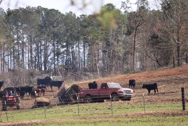 Feeding Flood Damaged Hay