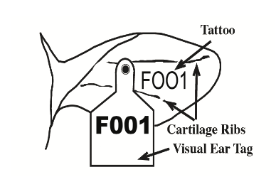 Figure 1. Cattle ear tag and tattoo diagram