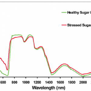 Figure 3b. Change in spectral reflectance for a portion of the EM spectrum for a healthy sugar beet plant and one under water stress.