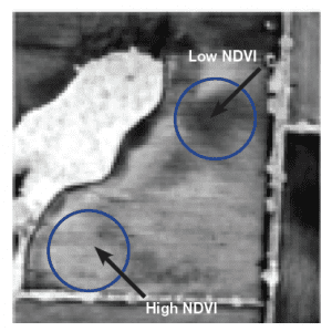 Figure 5b. Vegetation index (NDVI) image differentiating biomass differences