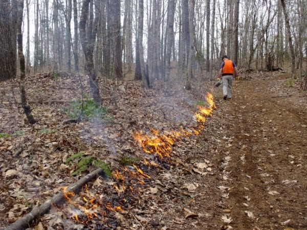Figure 2. A good fire line is needed to conduct a prescribed fire (right side of photo). The width of the fire line can be as narrow as a plowed line or as wide as several feet.