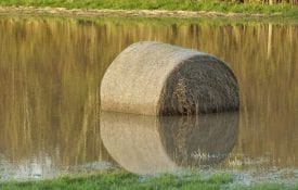 Flooded bale of hay.