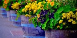 Row Of Potted Plants In Garden