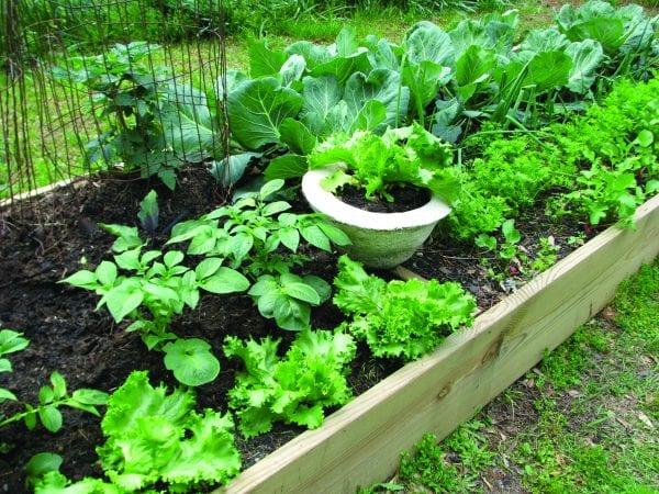Raised Bed Gardening - Alabama Cooperative Extension System