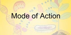 Mode of Action Illustration