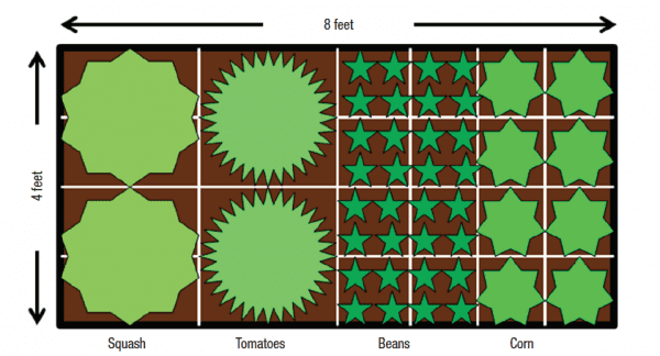 Example of blocking planting--vegetable spacing and grouping.