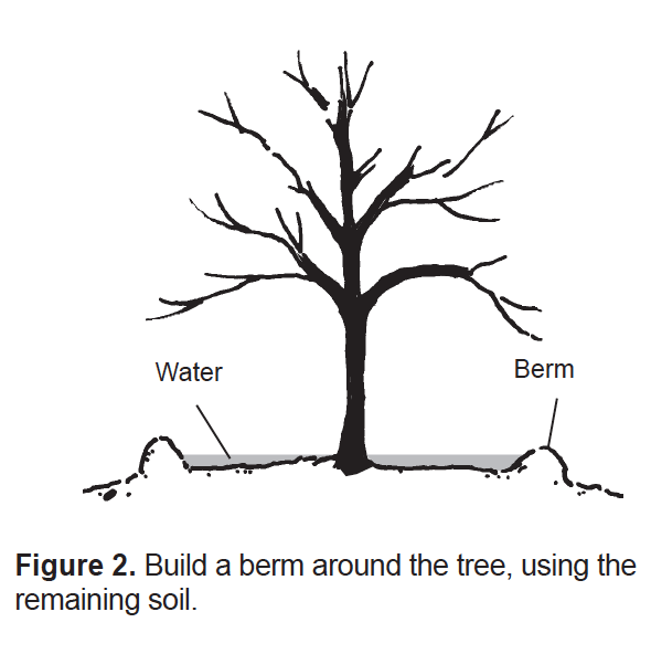 Build a berm around the tree, using the remaining soil.