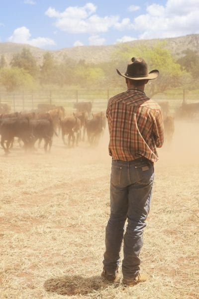 A cowboy standing in a dusty working pen with cattle.