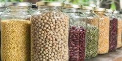 Dried bean seeds