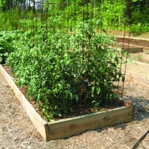 Raised bed garden with wire on each side.