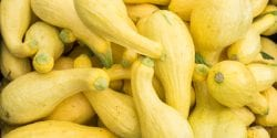 Yellow squash at a farmers market.