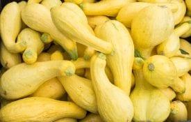 Yellow squash at a farmers market.