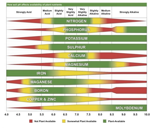 How soil pH affects availability of plant nutrients