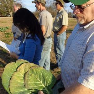 Man holding vegetable plant leaves