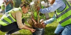 Volunteers planting tree in park